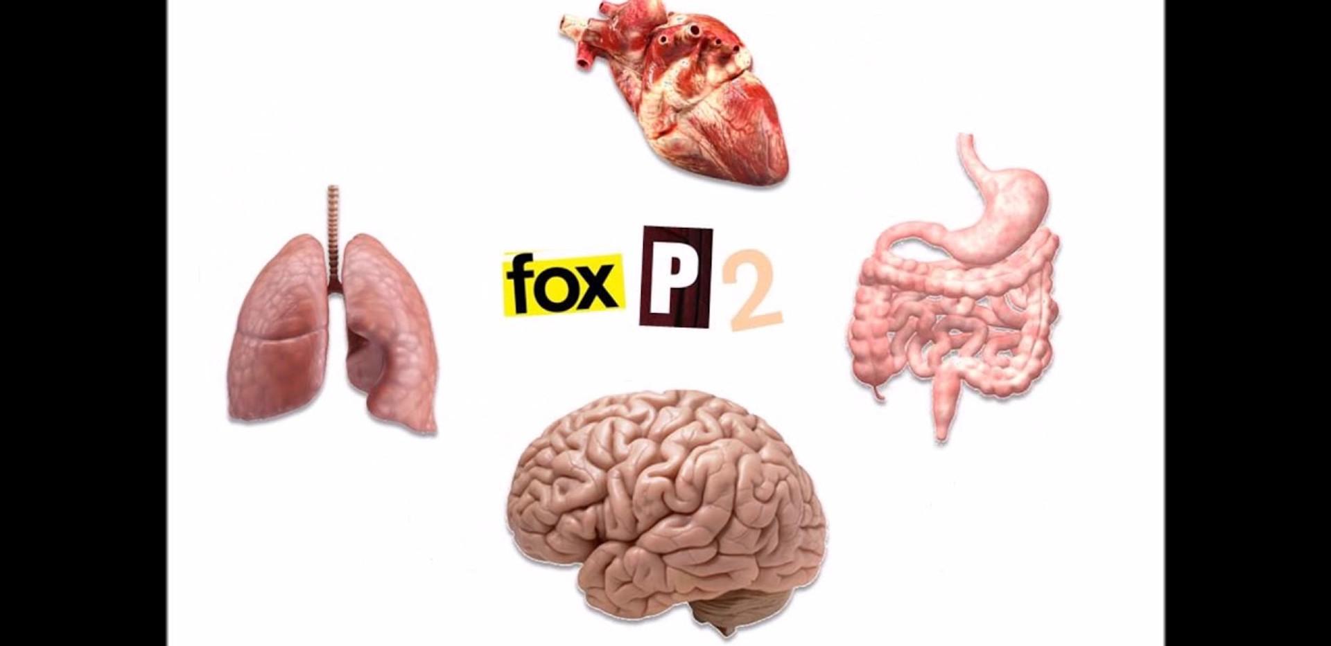 Mito ou verdade? FoxP2 é o gene da linguagem?