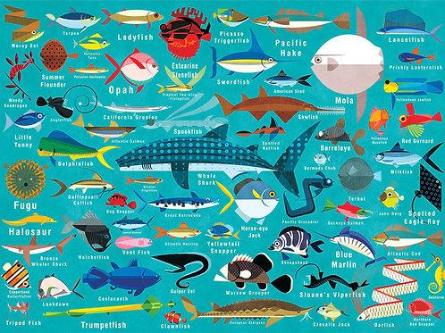 Ocean Life, 1000pc