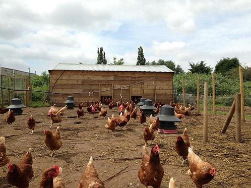 Free Range Poplars Farm Eggs per half dozen