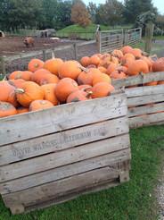 pumpkin-picking-frampton-cotterell