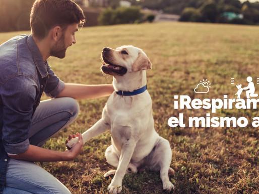La Detoxificación en nuestras mascotas … una necesidad