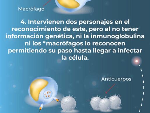 Entendiendo el Coronavirus desde la microbiología.