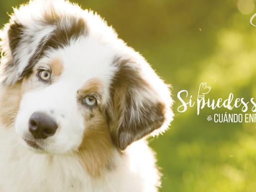Sintomatología en problemas digestivos en mascotas