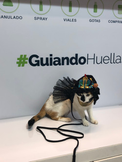 GUIADOR_HUELLAS_38