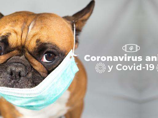 Hablemos del Coronavirus canino