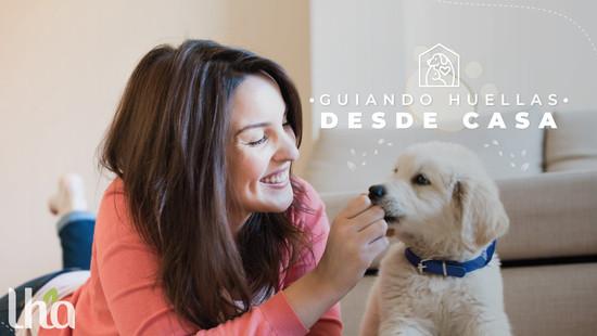 Tips para el cuidado de tu mascota en confinamiento
