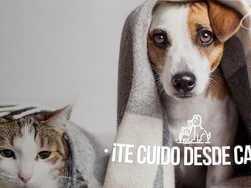 Manejo del asma en mascotas desde casa