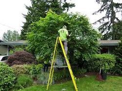 tree service image 2