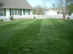 lawn pic 3
