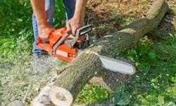 tree service image 3