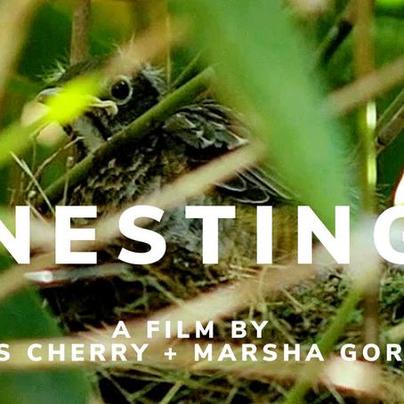 Nesting, a documentary short