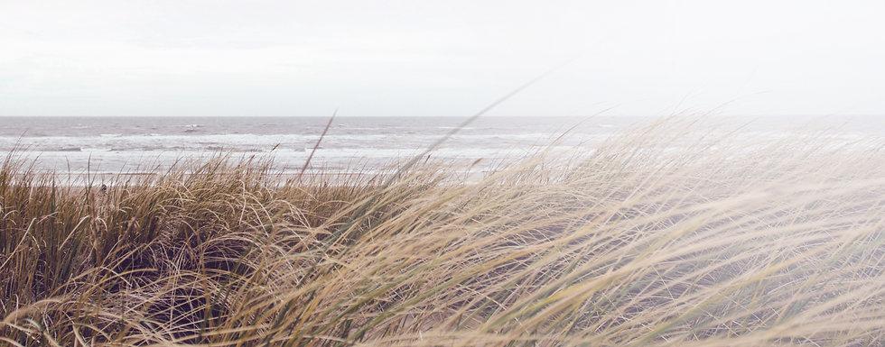 Sea Grass_edited.jpg
