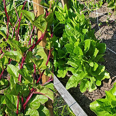 spinach4.jpg