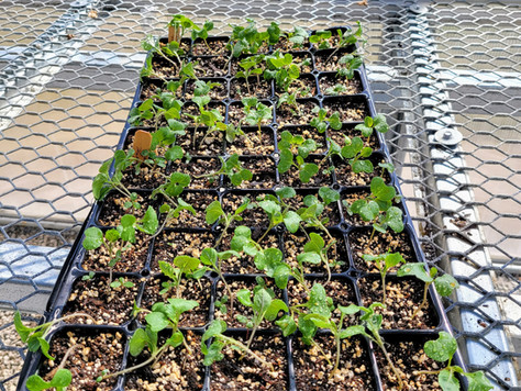 Starting Seeds - Let's Get Growing!