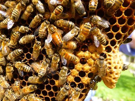 beekeeper2