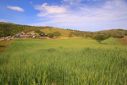 153-acre-ranch-for-sale.jpg