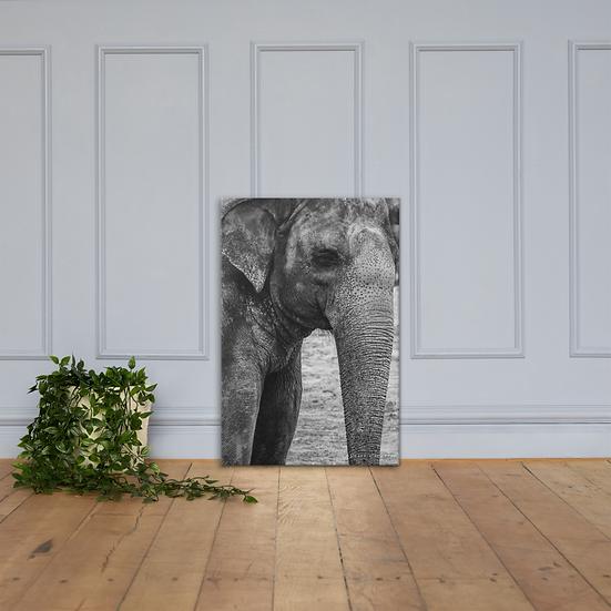 Elefante #1