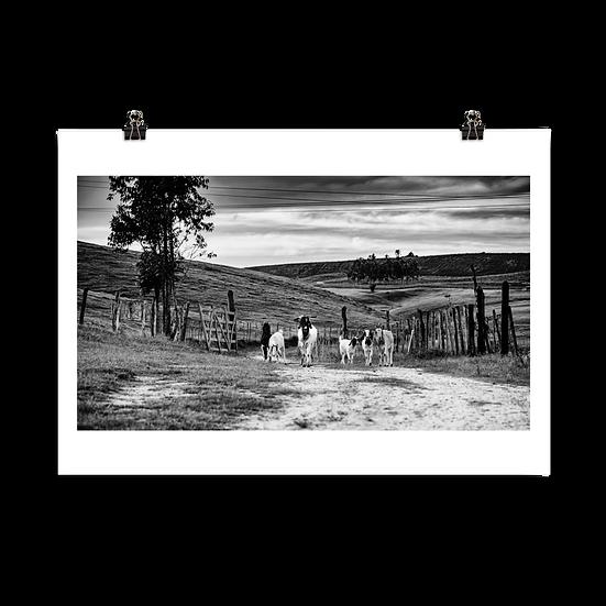 Cabras #90 - Poster