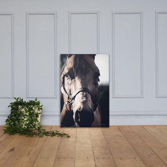 Cavalo #32