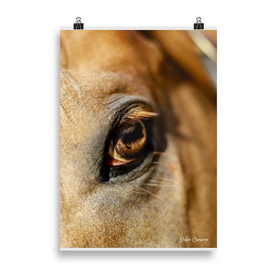 Cavalo #18 Poster