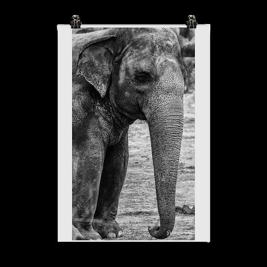 Elefante #1 Poster