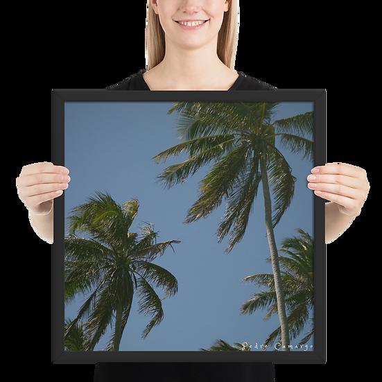 Coqueiros Framed