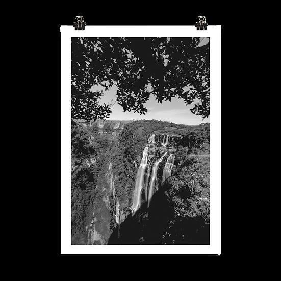 Cambará #7 - Poster