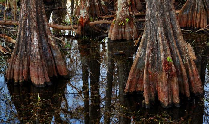Big Cypress NP_mg_3562-_mg_3566_20120113