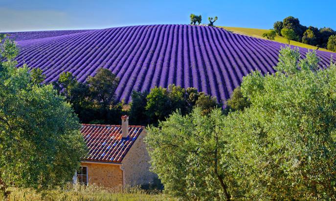 0M4A8221 Panorama.jpg