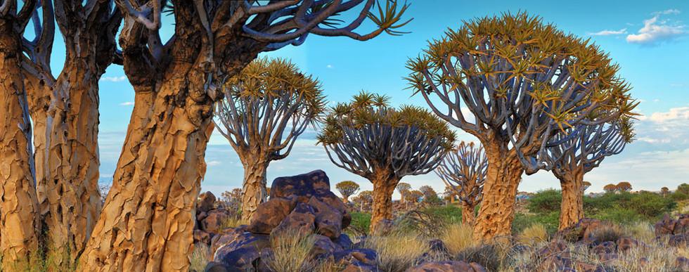 5V2A2763 Panorama.jpg