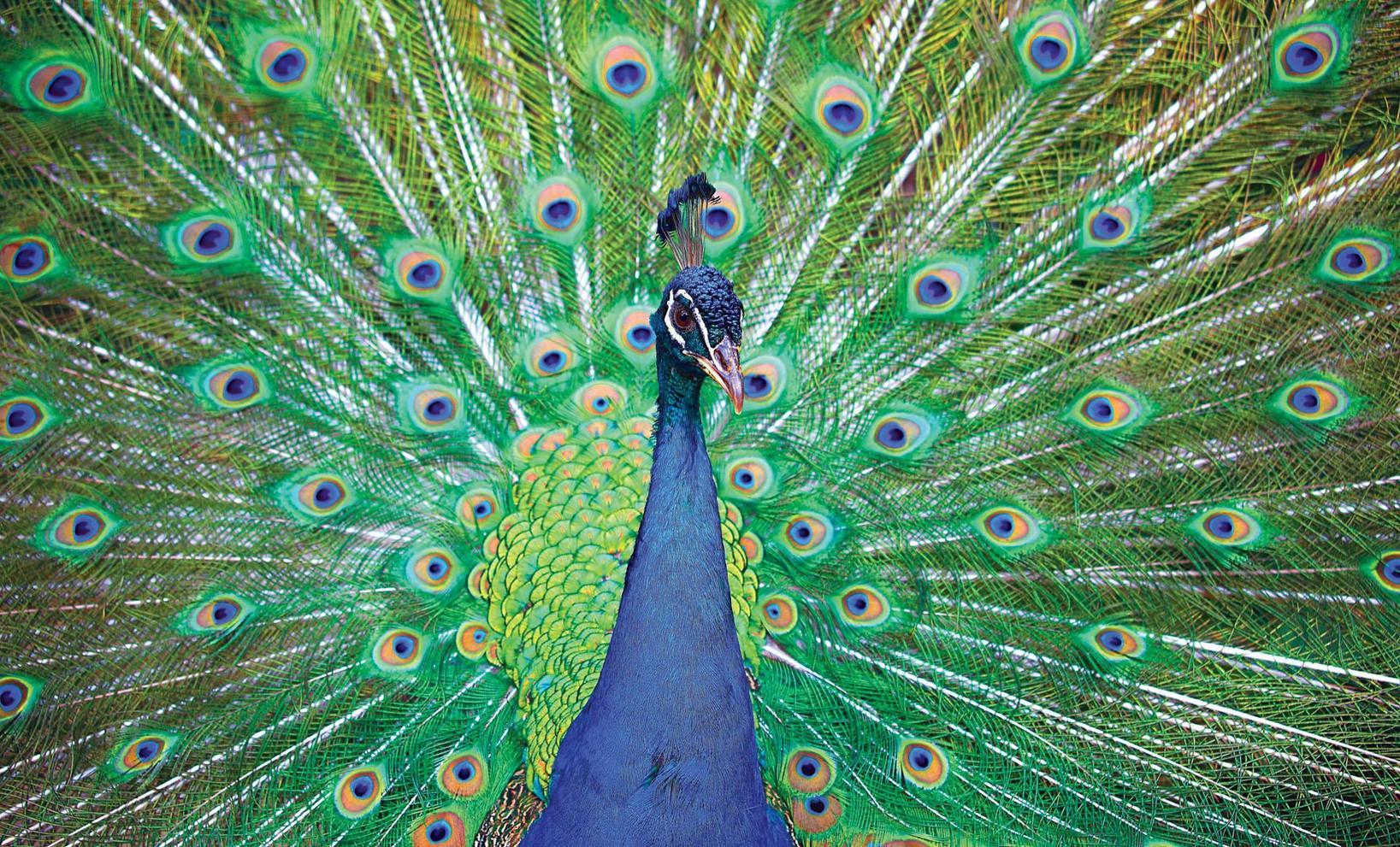 12_costa_rica_20101105_101126.jpg