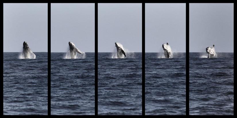 5_x_padajuce_whales_20130312_090316.jpg