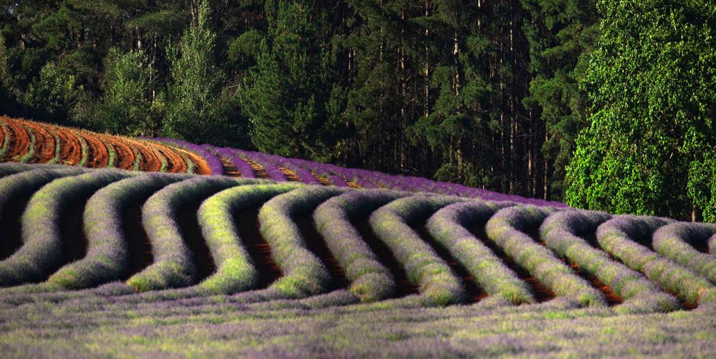 0M4A5488 Panorama.jpg