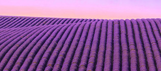 0M4A7821 Panorama.jpg