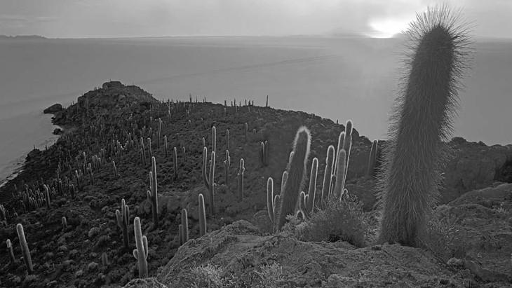 isla_incuhuasi_5_-_bolivia_20131003_1710