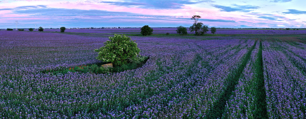 DJI_0111 Panorama.jpg