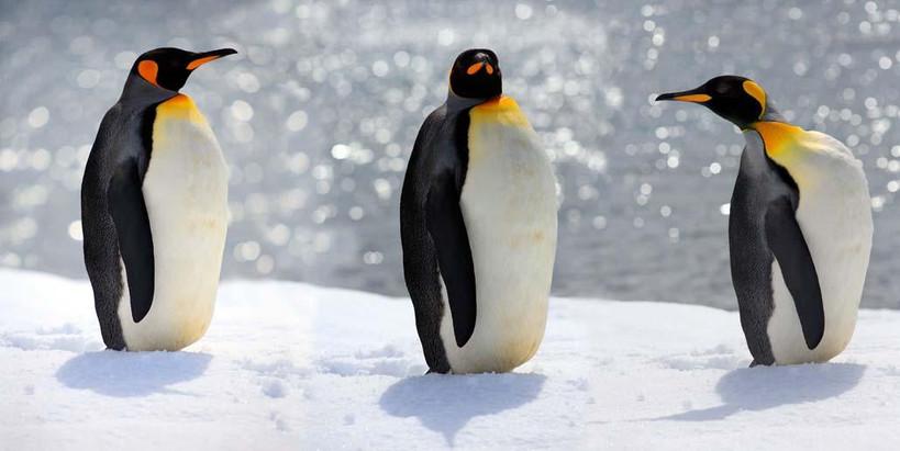 pinguinns_20131204_171247.jpg
