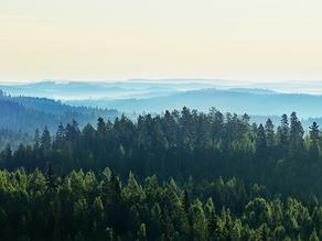 Principais normas de certificação florestal