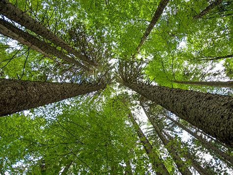 Gestão Florestal