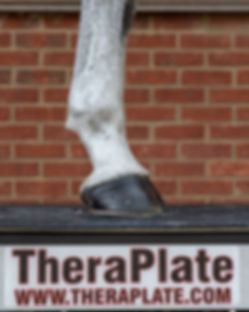 Horse's Hooves stood on a TheraPlate