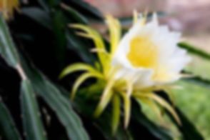 DF flower.jpg