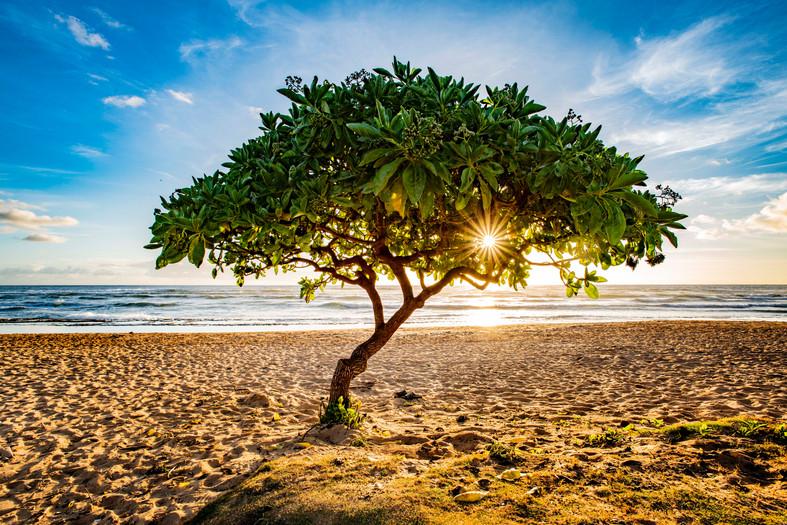 sunrisethroughtreeSMALL.jpg