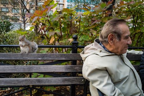 squirrelmanbenchL1140368.jpg