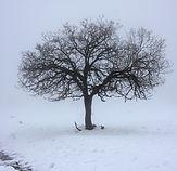 Boom in de sneeuw