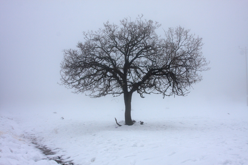 tree in a snowy field