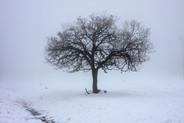 Snow Plowing - G03