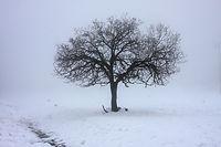 קניית עצי פרי - בדיקת אקלים