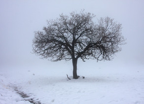 Managing absence due to bad weather