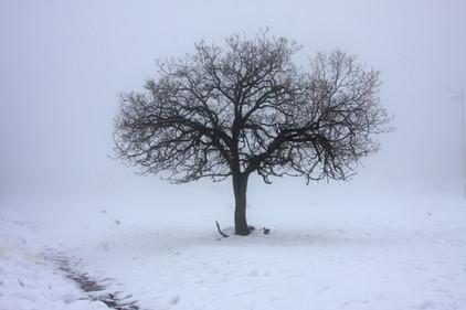 Baum im Schnee, www.fewo-dewes.com
