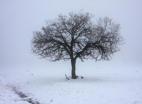 Apie nuotaikos pokyčius žiemą